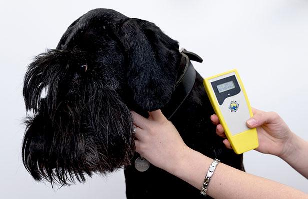Entscheidend ist jedoch, was die Hardware leisten kann - hier ein RFID-Chip zur Tierkennung. Dafür hilft die Kooperation mit Ingenieuren.