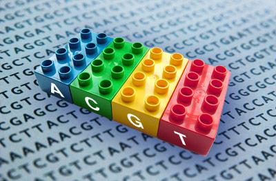 DNA-Bausteine