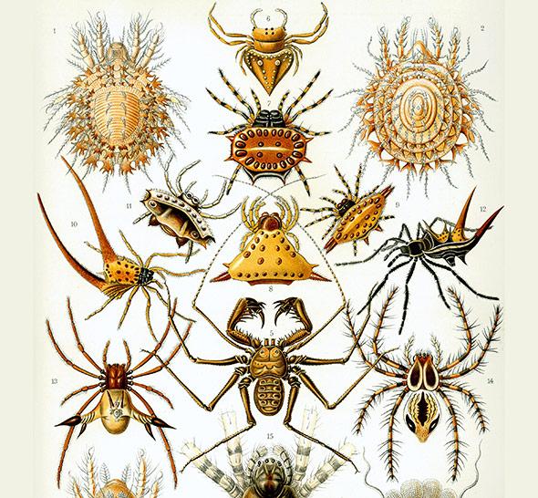 Zur Zeit des deutschen Zoologen Ernst Haeckel, von dem diese Zeichnungen stammen, hatte die Taxonomie noch Hochkunjunktur.