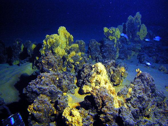 Die Tiefsee: Schatzkammer für begehrte Rohstoffe