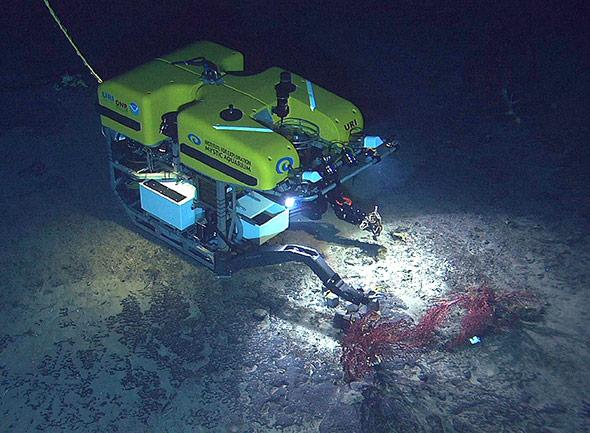 Erkundung am Seamount: ferngesteuerte Unterwasserroboter helfen dabei, die Lebenswelt der Tiefsee und ihre Anfälligkeiten zu erforschen.