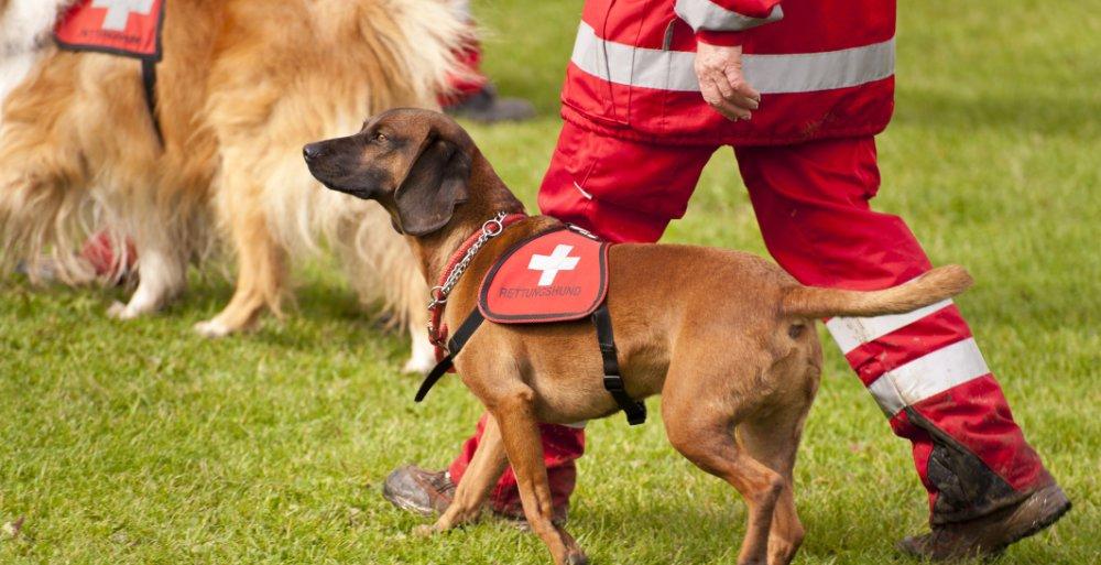 Der Rettungshund ist ein bekanntes Beispiel - doch Tiere helfen Menschen auch in vielen anderen Bereichen. © 3quarks/ istock