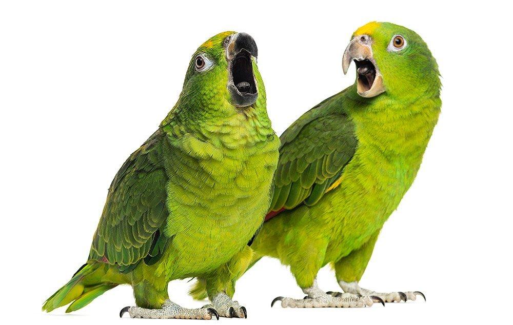 Auch Tiere verständigen sich mithilfe ihrer Lautsprache. © GlobalP / iStock