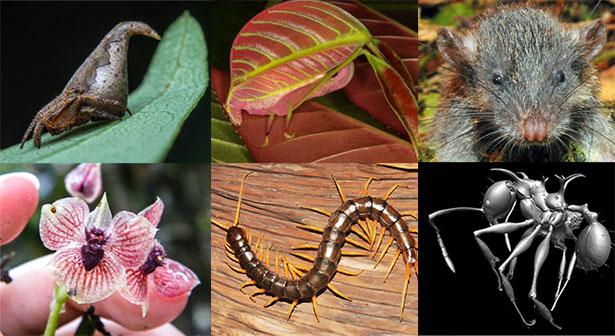Dies sind nur sechs der zehn ungewöhnlichsten Arten des Jahres 2017