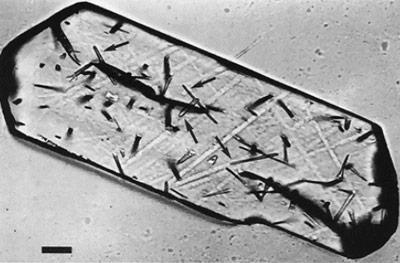 Spaltspuren von Uran in einem Apatit