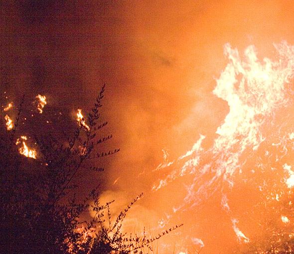 Wenn in der Sperrzone von Tschernobyl der Wald brennt, dann setzt dies radioaktive Elemente frei