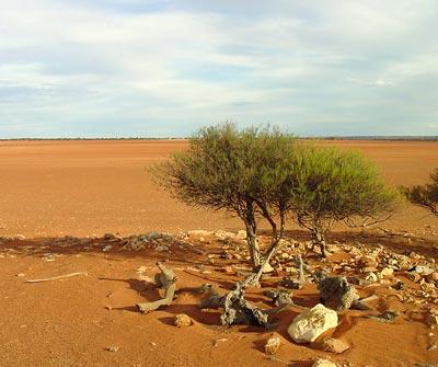 Eine drei Jahre anhaltende Dürre verwandelte dieses Weideland in Wüste