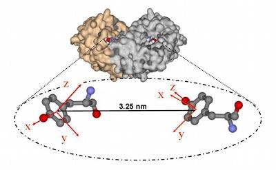 Proteinkomplex