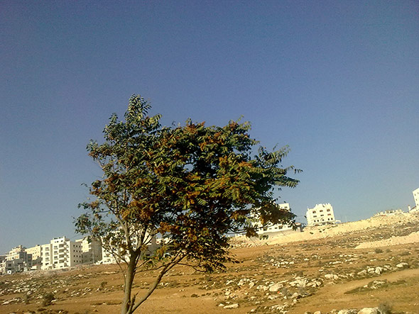 Die jordanische Hauptstadt Amman liegt in der Wüste – Trinkwasser ist knapp.