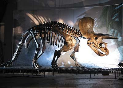 Triceratops besaß drei Hörner