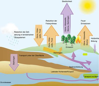 Ein komplexes System: Wetterextreme beeinflussen Vegetation und Klima auf vielfältige Weise.