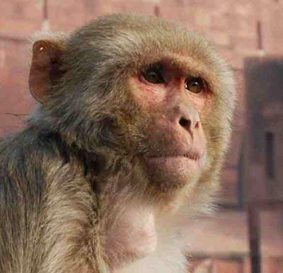 Menschen und Affen sind Experten für Gesichtererkennung und