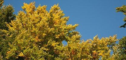 4c34a7e58b Frage: Warum verlieren nicht alle Bäume im Herbst ihre Blätter ...