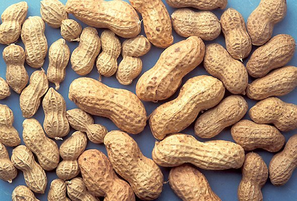 Erdnüsse Kinder