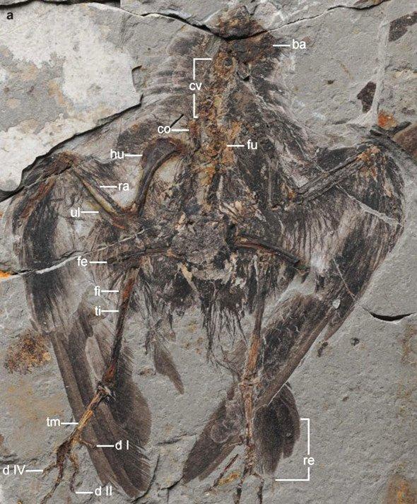Was sind die beiden Arten von Datieren Fossilien
