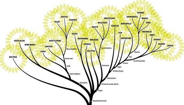 Forscher Stellen Erste Version Eines Umfassenden Stammbaums Aller