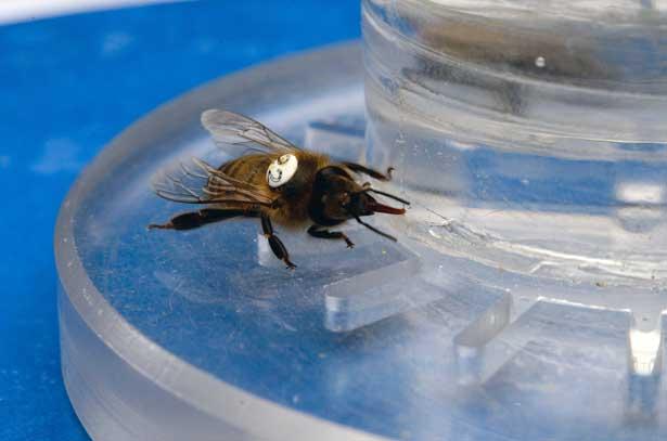 Zuckerwasser Bienen