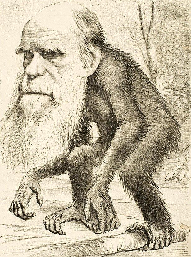 Charles Darwin Evolutionstheorie