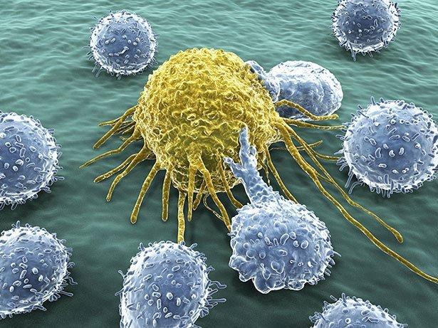 Fasten gegen Krebs?