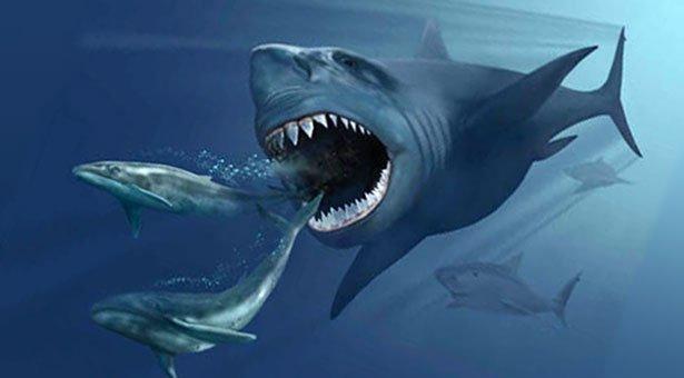 Größter Hai