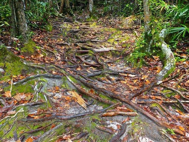 Regenwald Quiz Scinexx Das Wissensmagazin