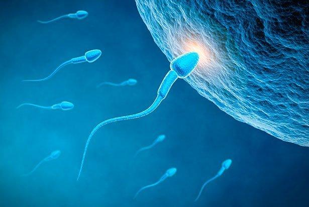 Warum Spermien umherzucken