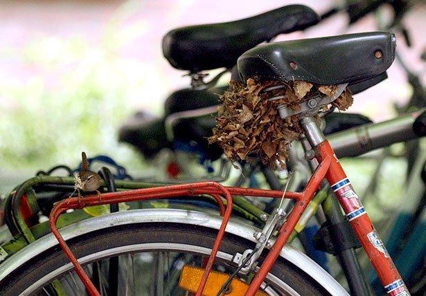 Ein Zaunkonig Baut Sein Nest Unter Einem Fahrradsattel Nestbau Der