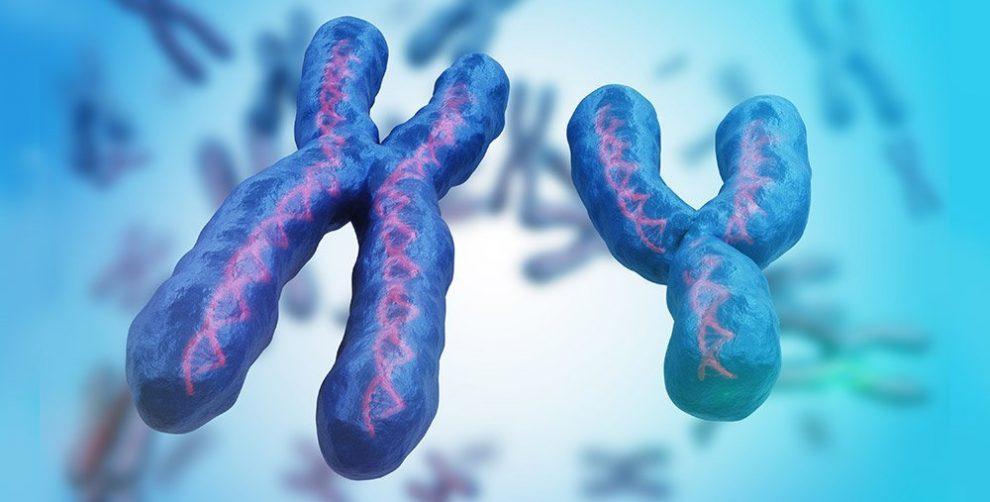 XY-Chromosomen