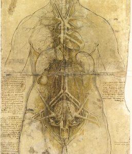 da Vinci Anatomie