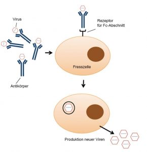 Antikörperabhängige Verschlimmerung