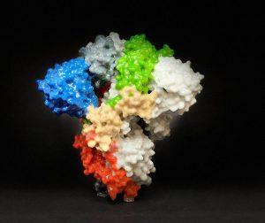 Spike-Protein