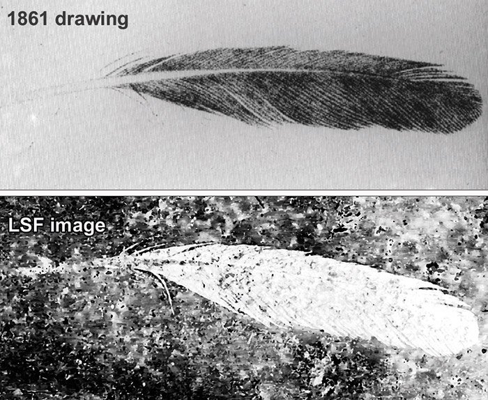 ARchaeopteryx-Feder Zeichnung
