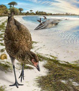 Asteriornis maastrichtensis