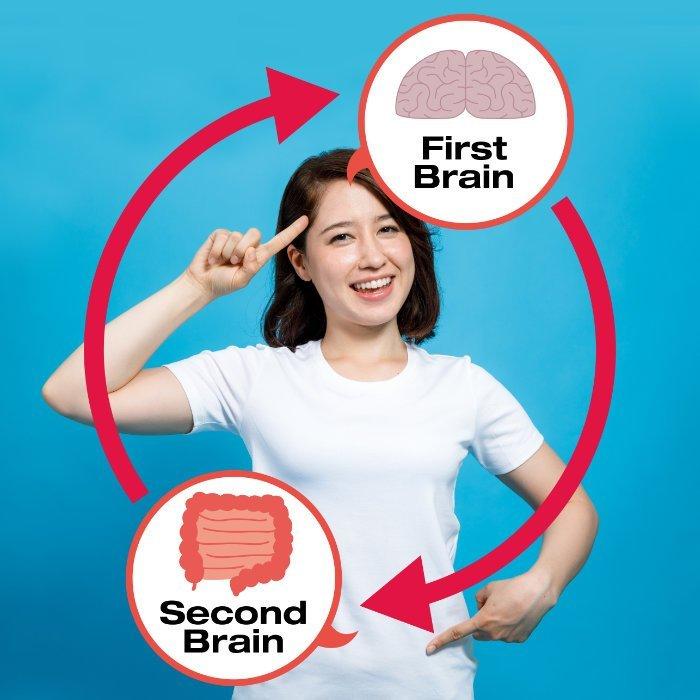 Erstes Gehirn und zweites Gehirn