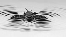 Schwimmende Biene