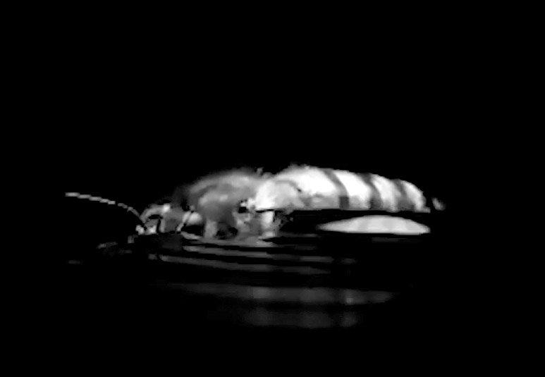 Biene im Wasser