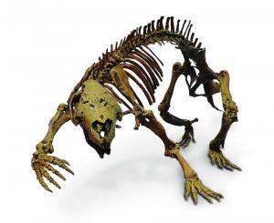 Skelett von Adalatherium