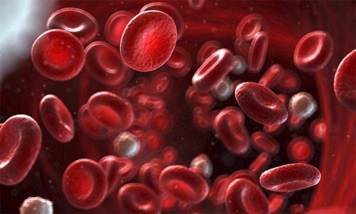Blut Rhesusfaktor
