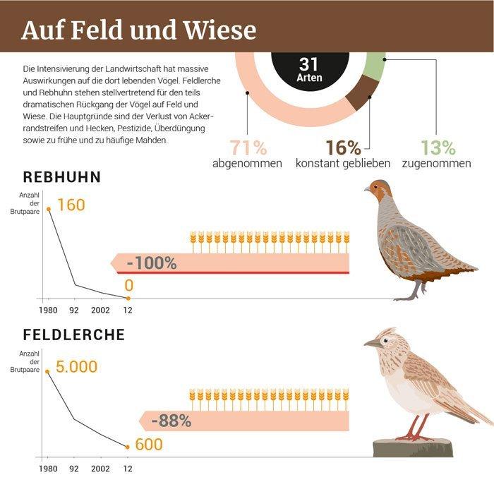 Vogelschwund am Bodensee
