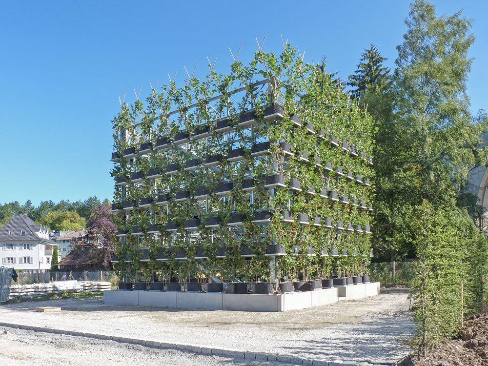 Bauwerk aus Pflanzen