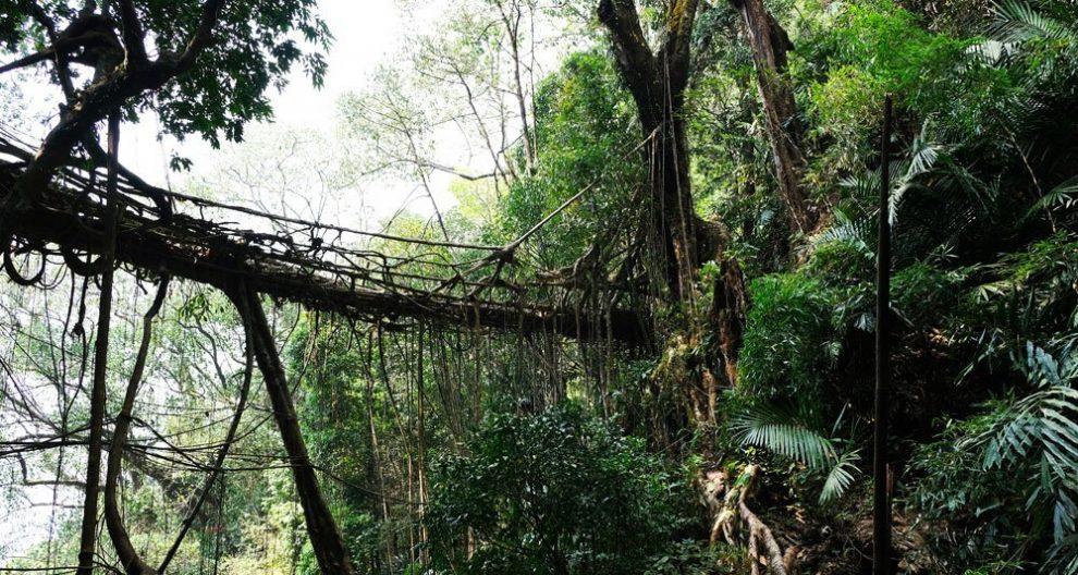 Meghalaya-Brücke