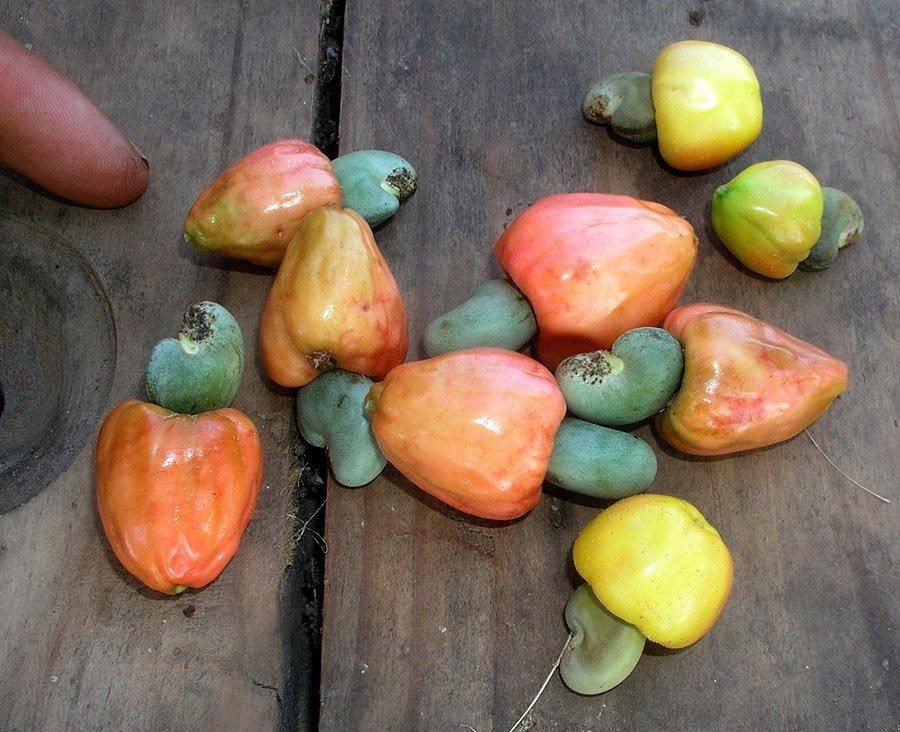 Cashew-Früchte