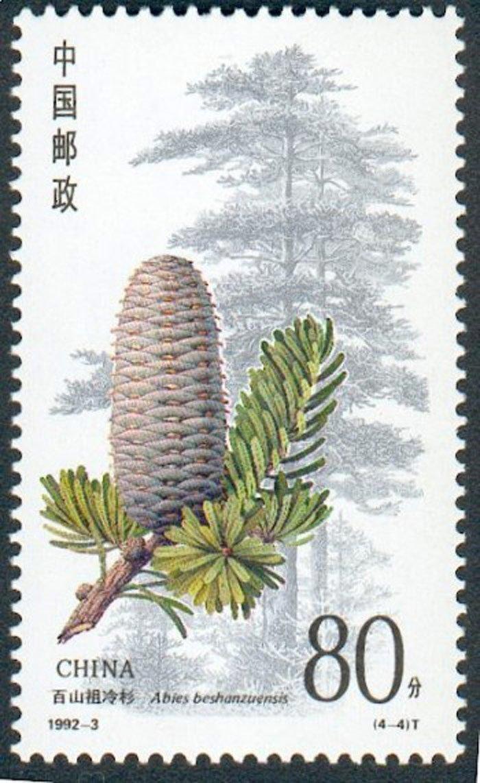 Abies beshanzuensis