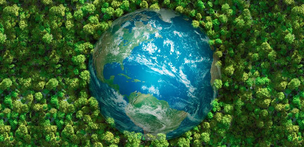 Pufferwirkung-der-Vegetation-sinkt