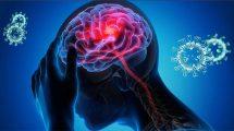 Gehirn Corona