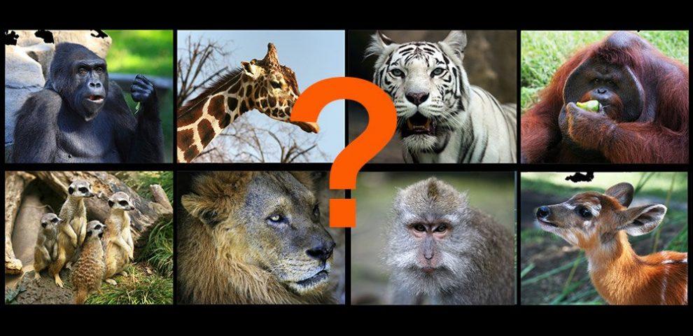 Welche Tiere sind anfällig?