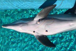 Delfin-EKG