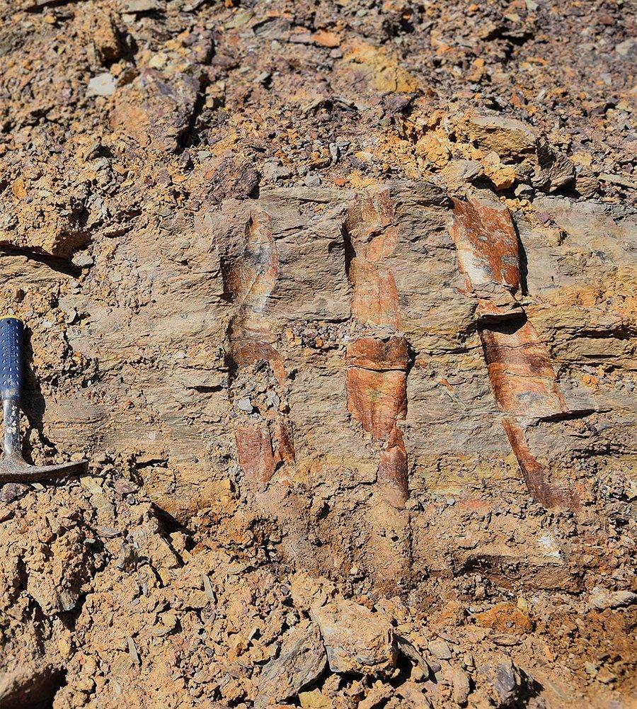 Xinhang-Fossil