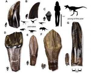 Dino-Zähne