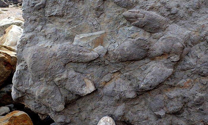 Iguanodon-Spuren